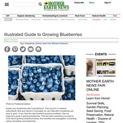Illustrated Guide to Growing Blueberries