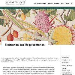 Illustration and Representation — Dumbarton Oaks