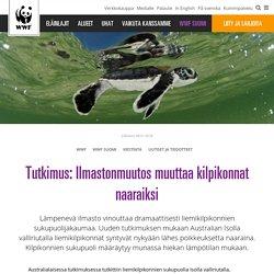 Tutkimus: Ilmastonmuutos muuttaa kilpikonnat naaraiksi