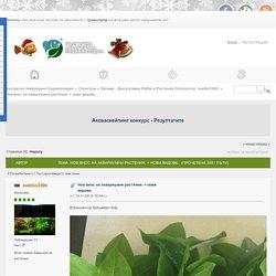 Нов внос на аквариумни растения. + нови видове.