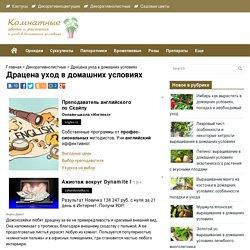 Драцена: размножение, пересадка и уход в домашних условиях, виды и фото (+видео): комнатная пальма