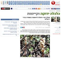 סחלב זעיר התגלה לראשונה בשמורה בהרי ירושלים