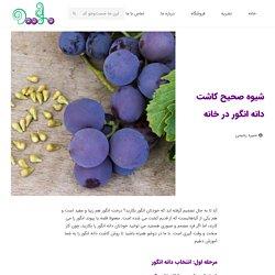 شیوه صحیح کاشت دانه انگور در خانه - دوشو