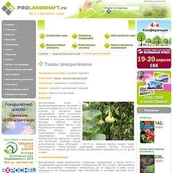 Энциклопедия растений: Тыква декоративная