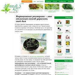 Выращивание розмарина дома, семенами