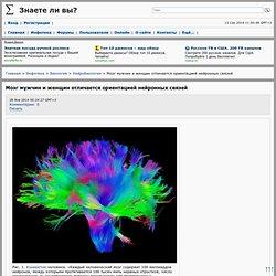 Мозг мужчин и женщин отличается ориентацией нейронных связей
