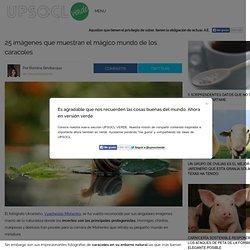 25 imágenes que muestran el mágico mundo de los caracoles