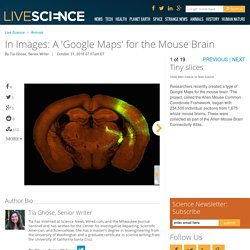 In Images: A 'Google Maps' for the Mouse Brain