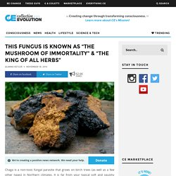 """This Fungus Is Known As """"The Mushroom Of Immortality"""" & """"The King Of All Herbs"""""""