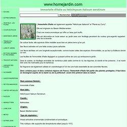 HERBE A CURRY Immortelle d'Italie ou helichrysum italicum serotinum