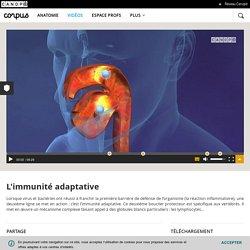 L'immunité adaptative - Corpus - réseau Canopé