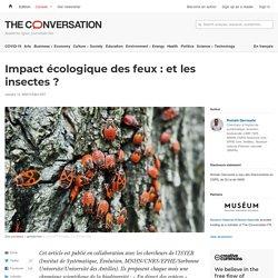 Impact écologique des feux : etles insectes ?