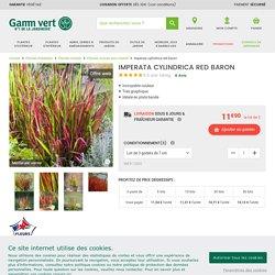 Imperata cylindrica red baron Lot de 3 godets de 7 cm