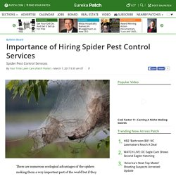 Importance of Hiring Spider Pest Control Services - Eureka, MO Patch
