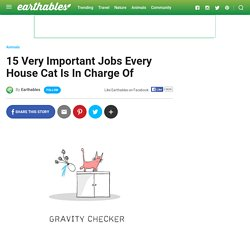 15 Very Important Jobs Every House Cat Is In Charge Of
