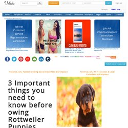 3 Important things you need to know before owing Rottweiler Puppies