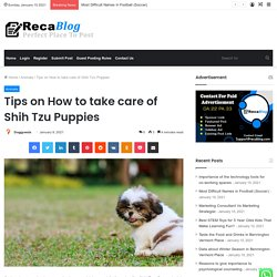 Important Tips on How to take care of Shih Tzu Puppies