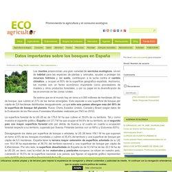 Datos Importantes Sobre Los Bosques En España