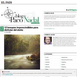 12 bosques imprescindibles para disfrutar del otoño >> Paco Nadal >> El Viajero