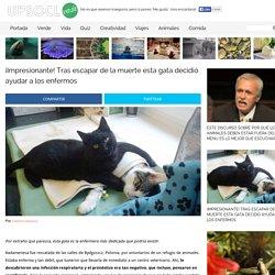 ¡Impresionante! Tras escapar de la muerte esta gata decidió ayudar a los enfermos