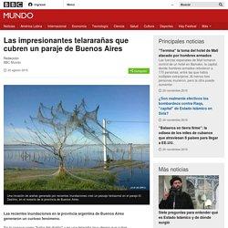 Las impresionantes telararañas que cubren un paraje de Buenos Aires - BBC Mundo