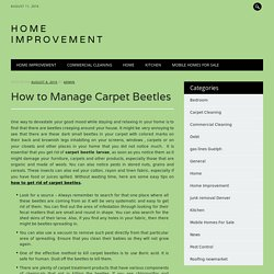How to Manage Carpet Beetles