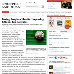 Biology Inspires Idea for Improving Lithium Ion Batteries