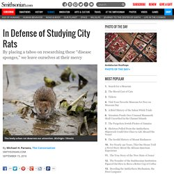 In Defense of Studying City Rats