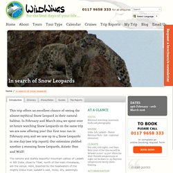 In search of Snow Leopards
