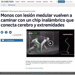 Monos con lesión medular vuelven a caminar con un chip inalámbrico que conecta cerebro y extremidades