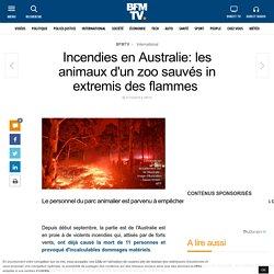 Incendies en Australie: les animaux d'un zoo sauvés in extremis des flammes