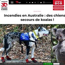 Incendies en Australie : des chiens au secours de koalas!