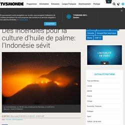 Des incendies pour la culture d'huile de palme: l'Indonésie sévit