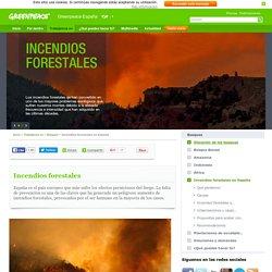 Incendios forestales - Bosques