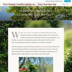 What Does Include in a Complete Tree Service?