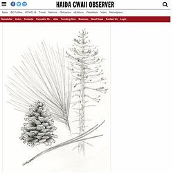 Iconic Haida Gwaii species to be included in literary field guide for 'Cascadia' – Haida Gwaii Observer