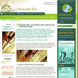 PASSERELLE ECO - SEPT 2011 - Chrysomèle : la rotation des cultures est incontournable