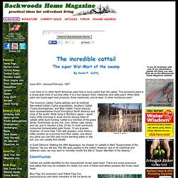 The incredible cattail - The super Wal-Mart of the swamp by Kevin F. Duffy Issue #43