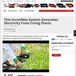 This Incredible System Generates Electricity From Living Plants