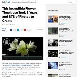 This Incredible Flower Timelapse Took 3 Years and 8TB of Photos to Create