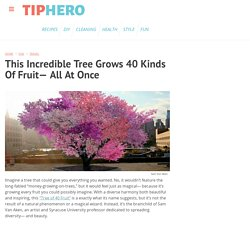 This Incredible Tree Grows 40 Kinds Of Fruit