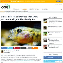 5 Incredible Fish Behaviors That Show Just How Intelligent They Really Are
