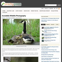 Incredible Wildlife Photography | Peachy Green