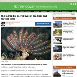 The secret lives of sea lilies and feather stars