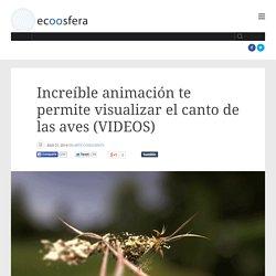 Increíble animación te permite visualizar el canto de las aves (VIDEOS)