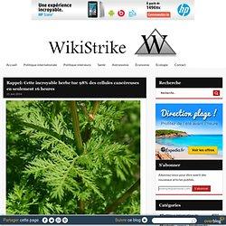 Rappel: Cette incroyable herbe tue 98% des cellules cancéreuses en seulement 16 heures - Wikistrike