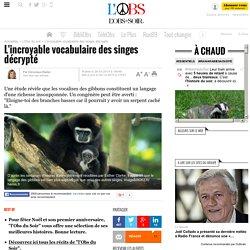 L'incroyable vocabulaire des singes décrypté