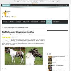 Les 10 plus incroyables animaux hybrides. - La banane qui parle