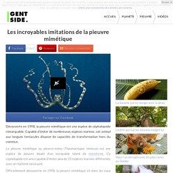 Les incroyables imitations de la pieuvre mimétique