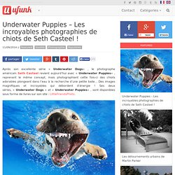 Underwater Puppies – Les incroyables photographies de chiots de Seth Casteel